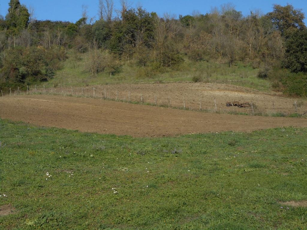ARANOVA/FIUMICINO RUSTICO - TERRENO AGRICOLO TL/1